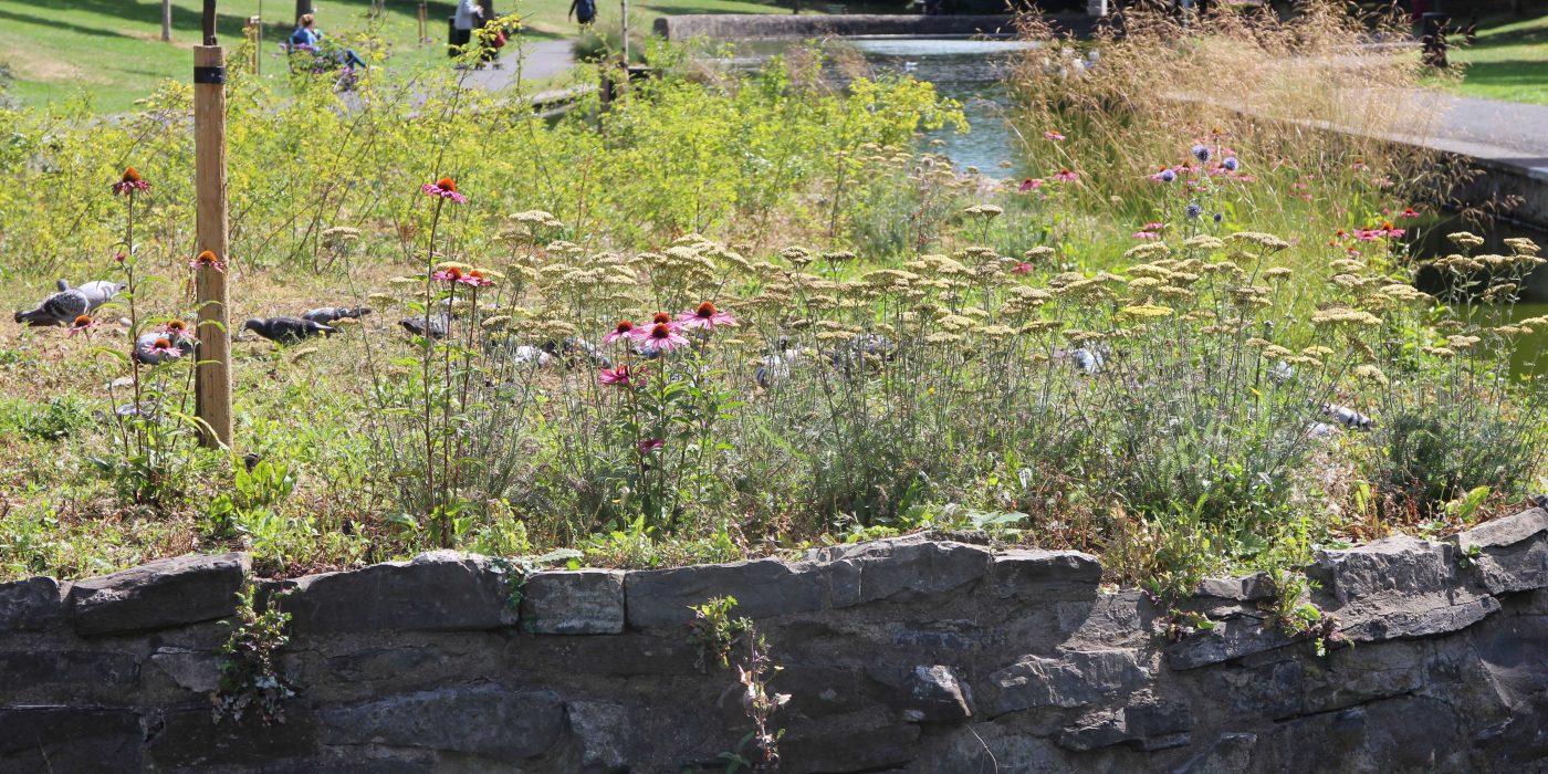 Perennial Planting in Ranelagh Gardens c Roisin Byrne